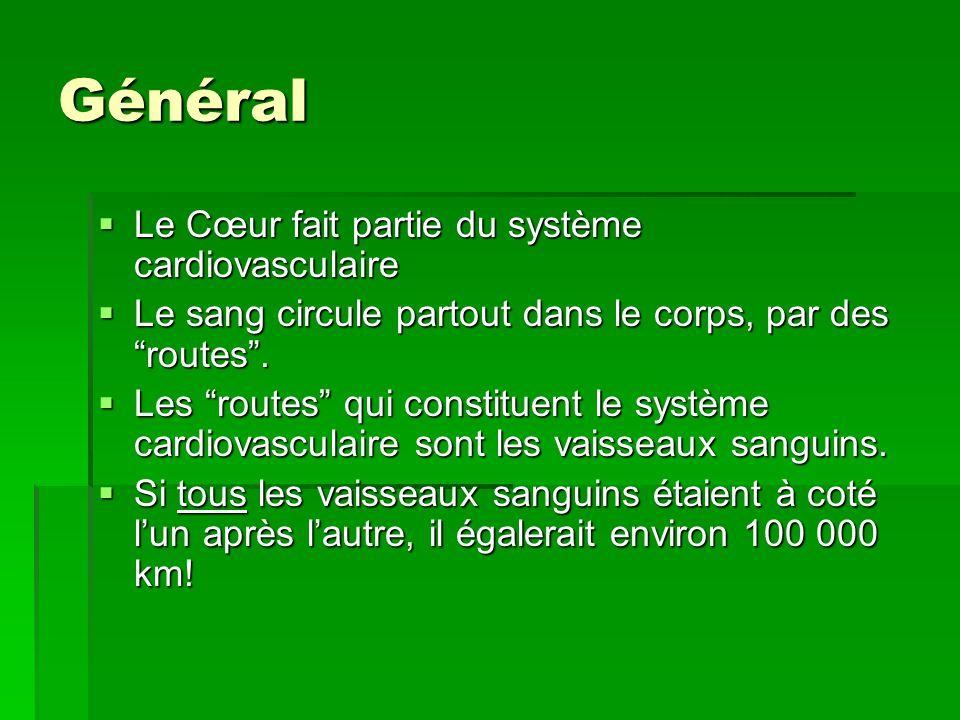 Général Le Cœur fait partie du système cardiovasculaire
