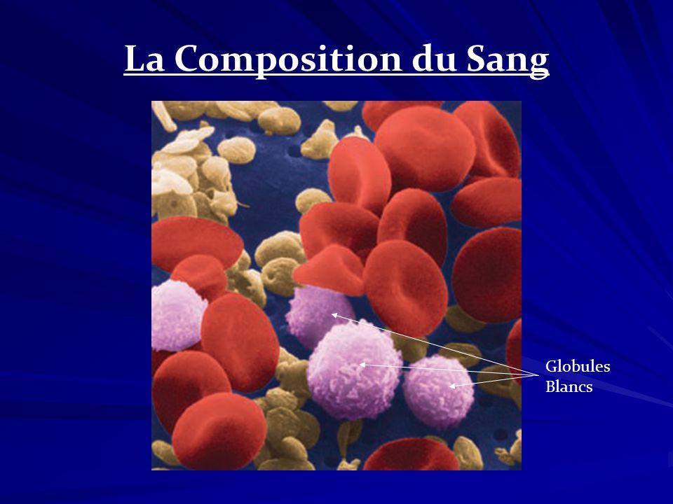 La Composition du Sang Globules Blancs