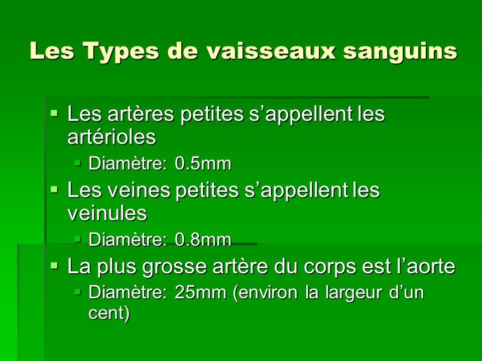 Les Types de vaisseaux sanguins