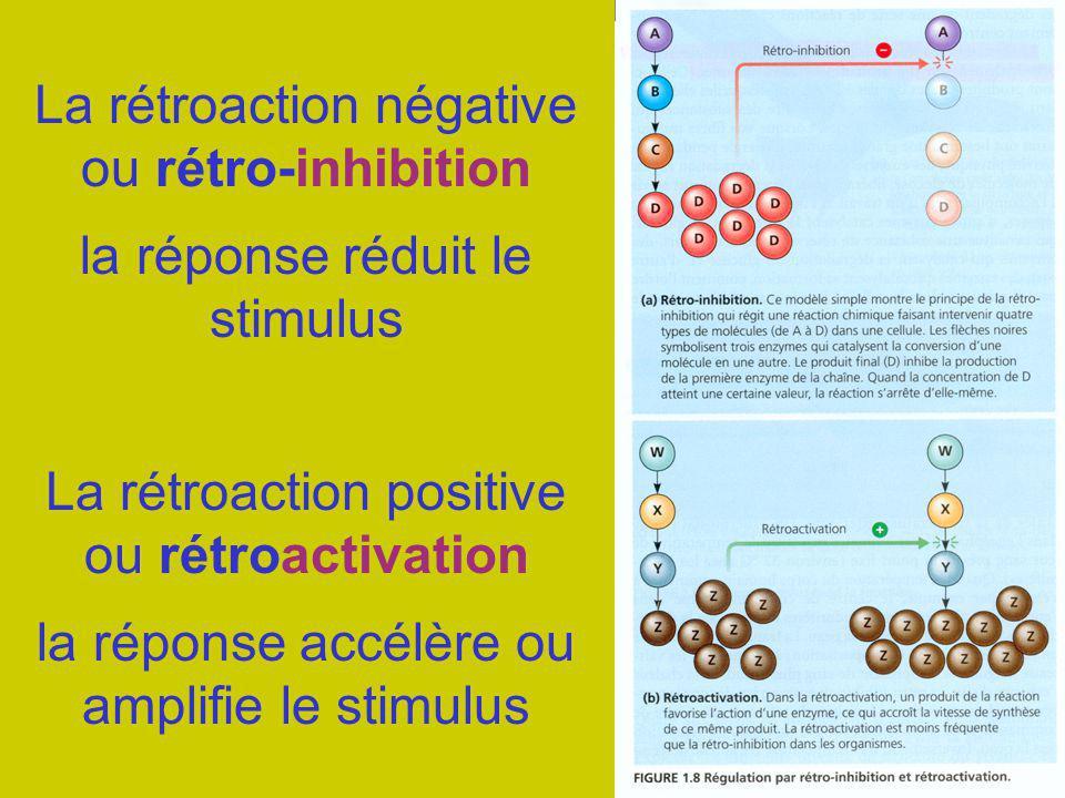 La rétroaction négative ou rétro-inhibition