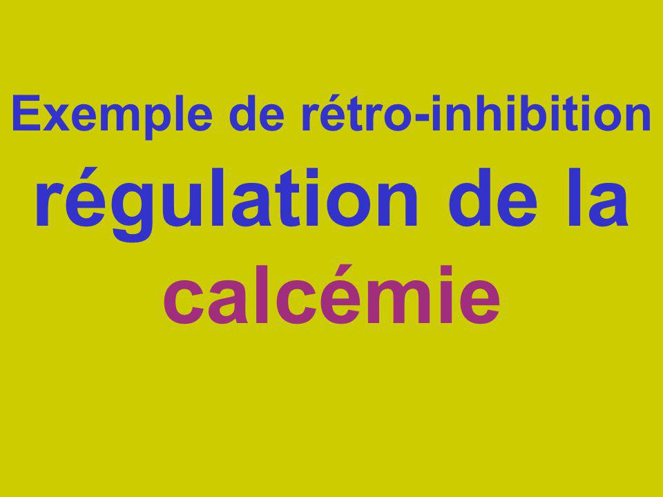 Exemple de rétro-inhibition régulation de la calcémie