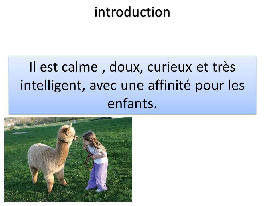 introduction Il est calme , doux, curieux et très intelligent, avec une affinité pour les enfants.