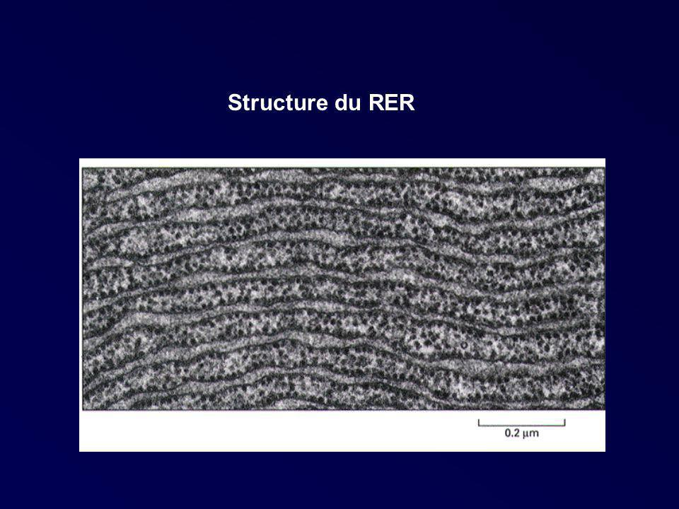 Structure du RER