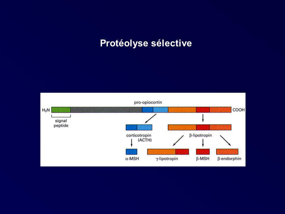Protéolyse sélective
