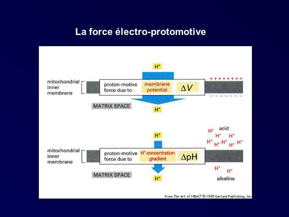 La force électro-protomotive