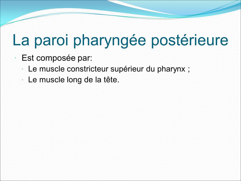 La paroi pharyngée postérieure