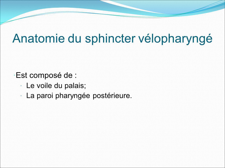 Anatomie du sphincter vélopharyngé