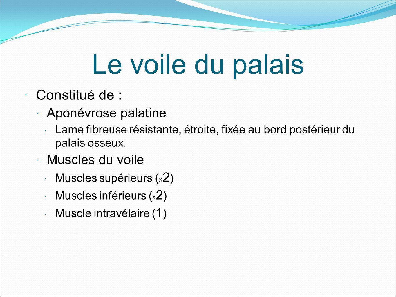 Le voile du palais Constitué de : Aponévrose palatine Muscles du voile