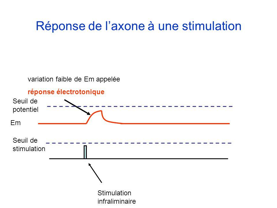 Réponse de l'axone à une stimulation