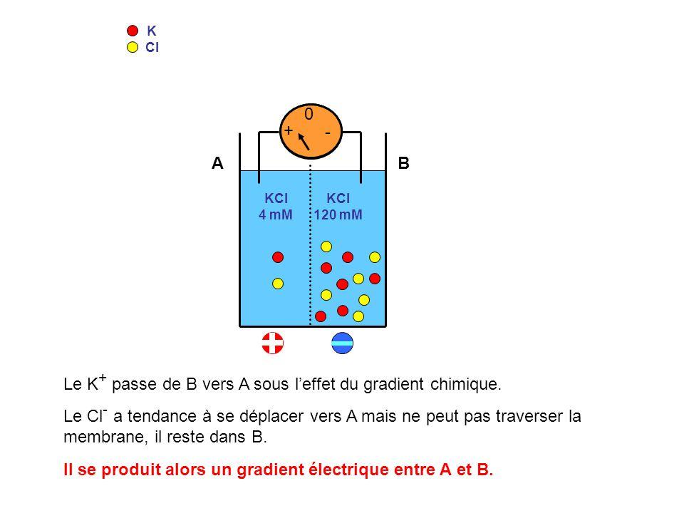 Le K+ passe de B vers A sous l'effet du gradient chimique.