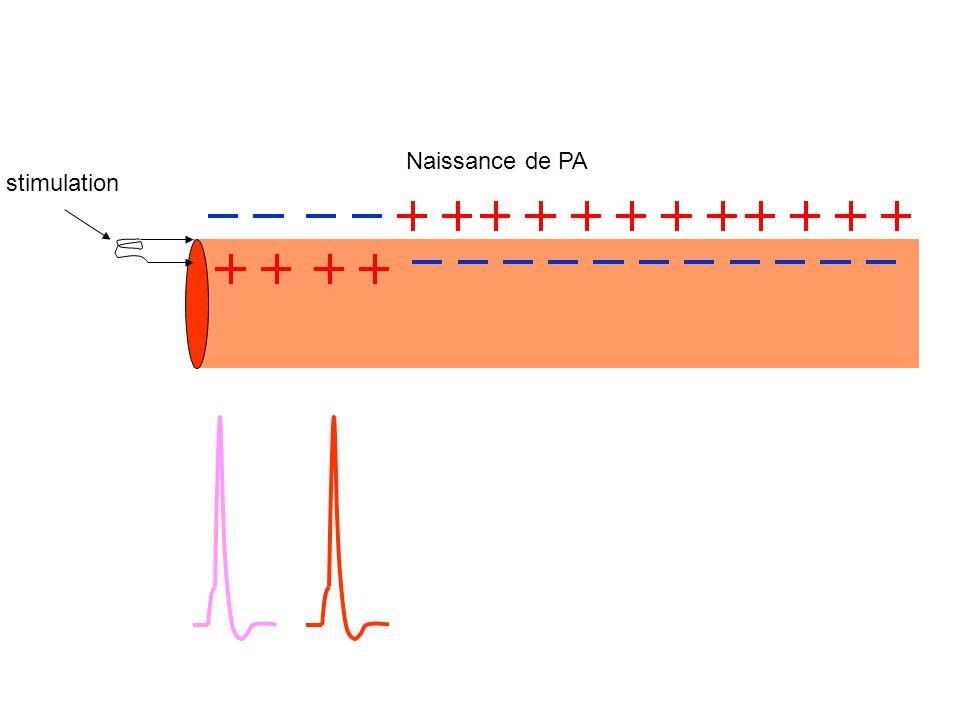 Naissance de PA stimulation