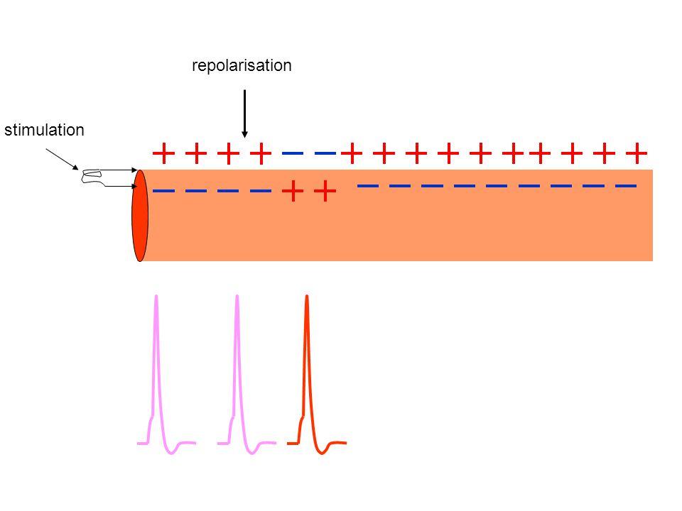 repolarisation stimulation