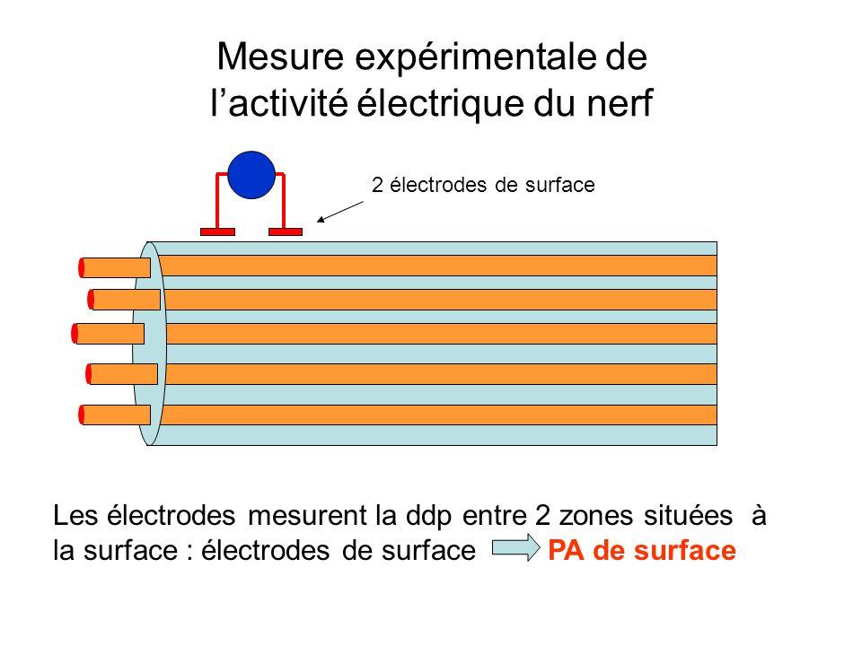 Mesure expérimentale de l'activité électrique du nerf