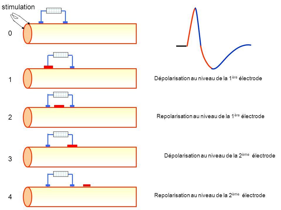 stimulation 1 2 3 4 Dépolarisation au niveau de la 1ère électrode