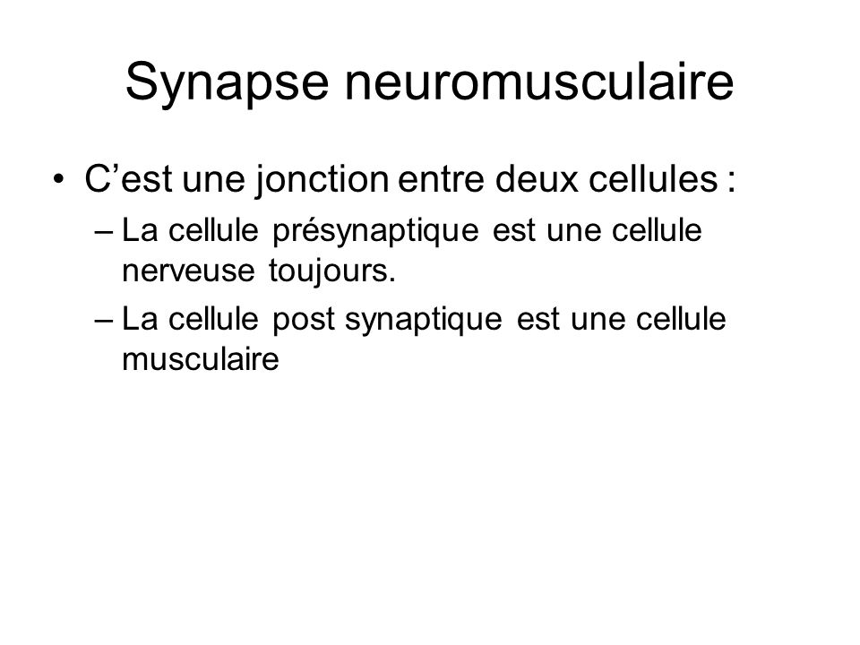 Synapse neuromusculaire