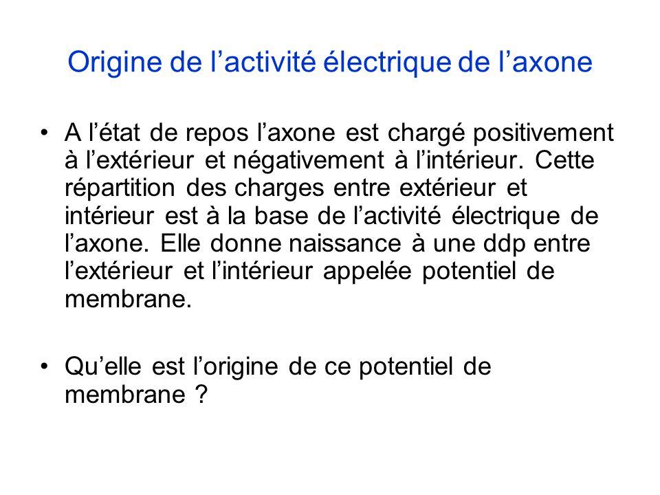 Origine de l'activité électrique de l'axone