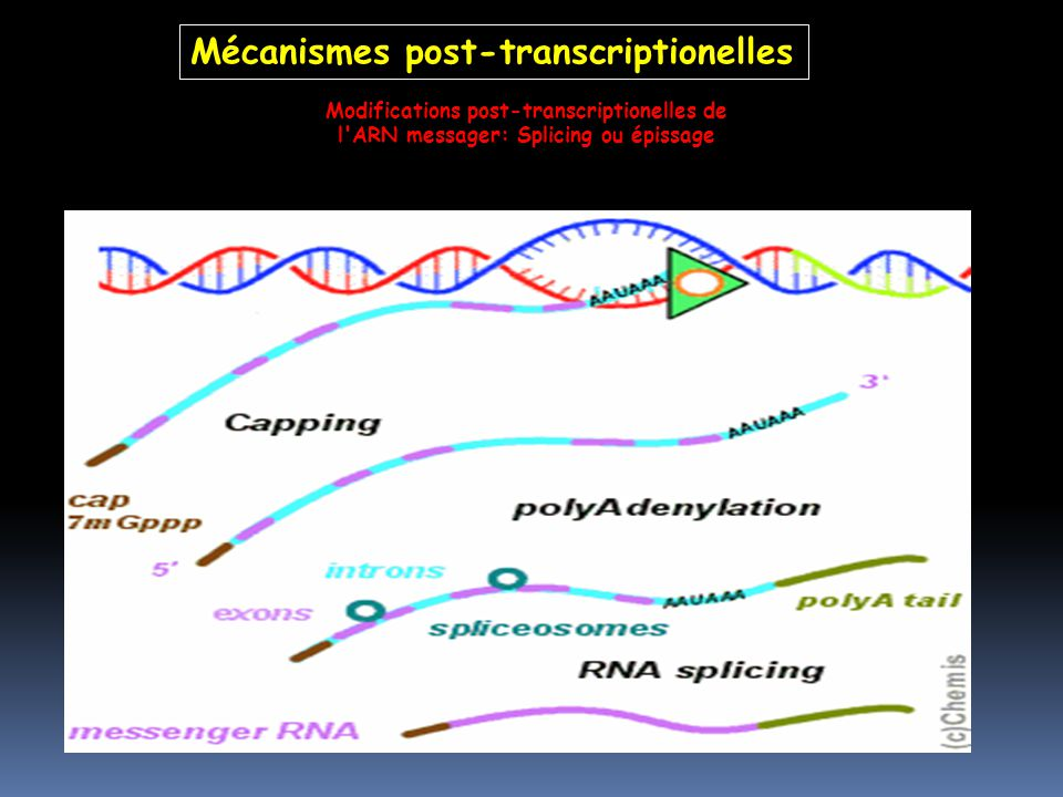 Mécanismes post-transcriptionelles
