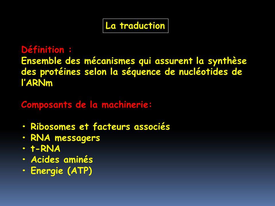 La traduction Définition : Ensemble des mécanismes qui assurent la synthèse des protéines selon la séquence de nucléotides de l'ARNm.