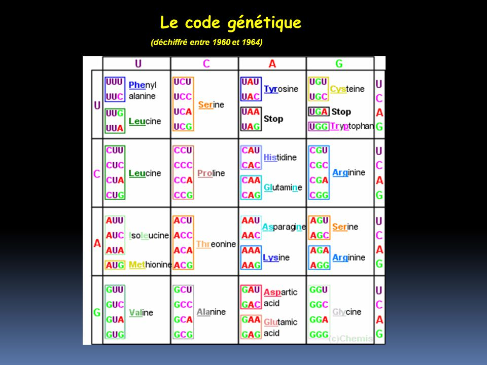 Le code génétique (déchiffré entre 1960 et 1964)