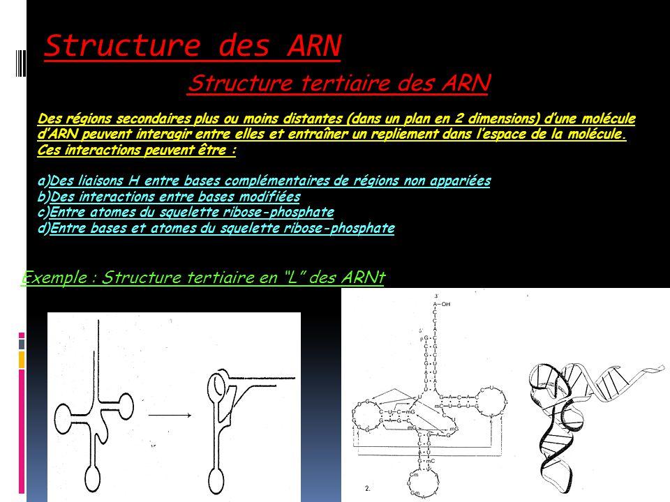 Structure des ARN Structure tertiaire des ARN