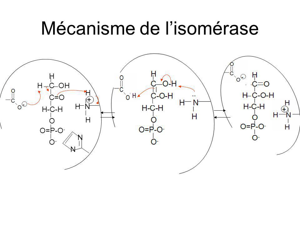 Mécanisme de l'isomérase