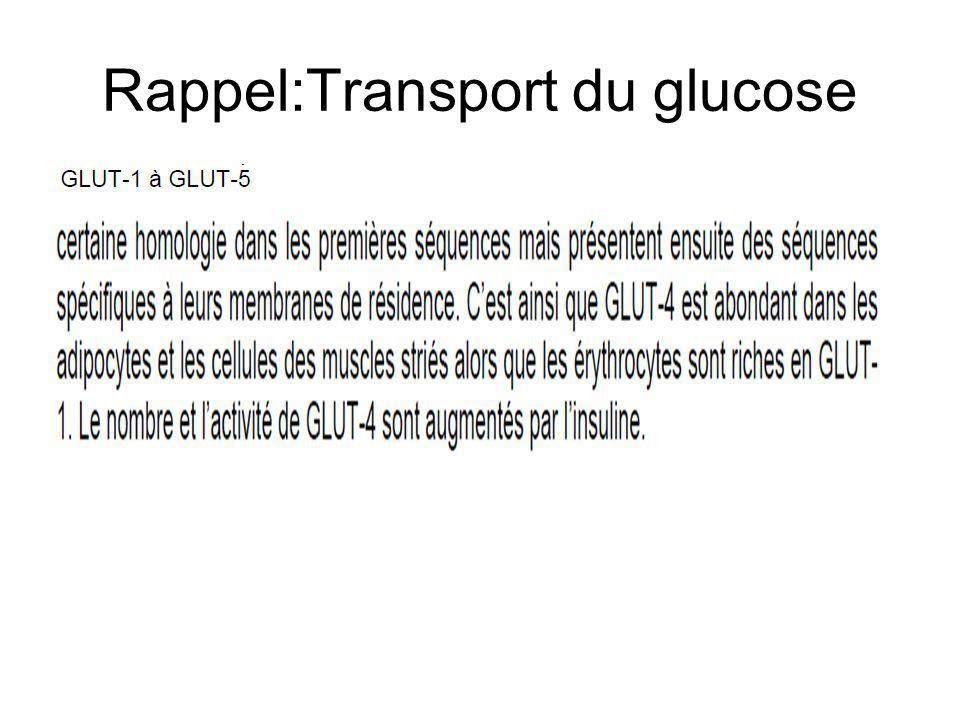 Rappel:Transport du glucose