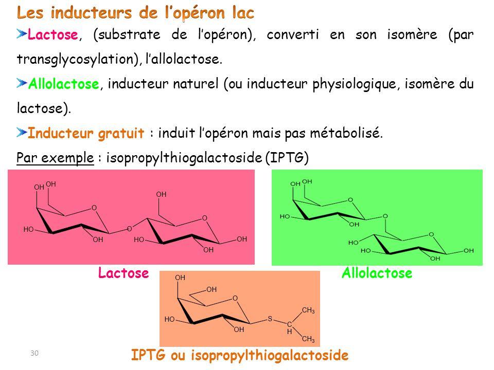 IPTG ou isopropylthiogalactoside