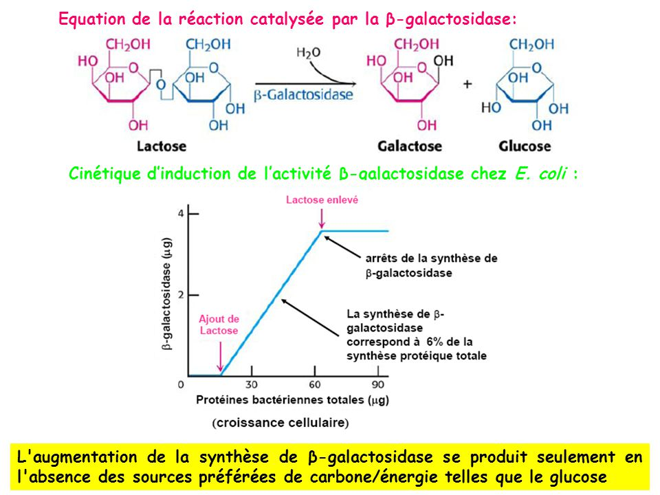 Equation de la réaction catalysée par la β-galactosidase: