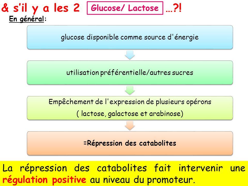Glucose/ Lactose & s'il y a les 2. … ! En général: glucose disponible comme source d énergie. utilisation préférentielle/autres sucres.