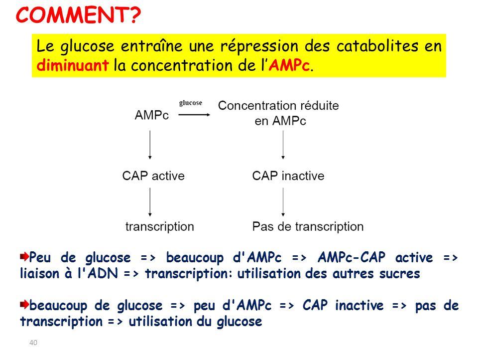 COMMENT Le glucose entraîne une répression des catabolites en diminuant la concentration de l'AMPc.