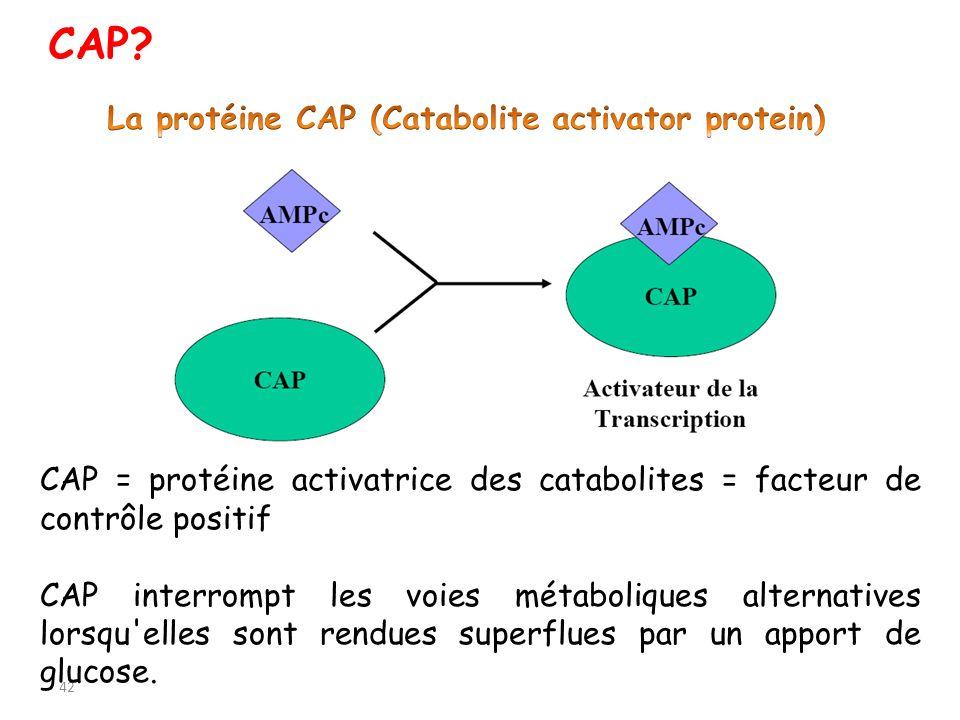 CAP La protéine CAP (Catabolite activator protein)