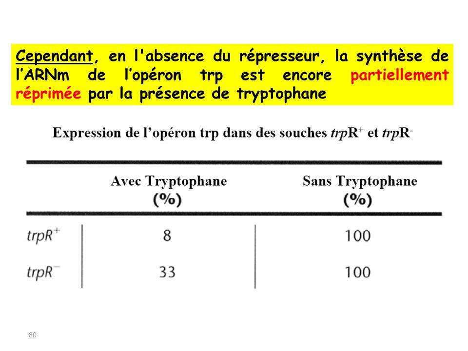 Cependant, en l absence du répresseur, la synthèse de l'ARNm de l'opéron trp est encore partiellement réprimée par la présence de tryptophane