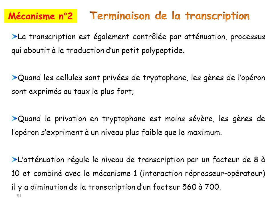Terminaison de la transcription