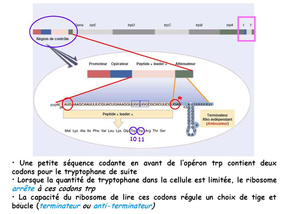 • Une petite séquence codante en avant de l'opéron trp contient deux codons pour le tryptophane de suite