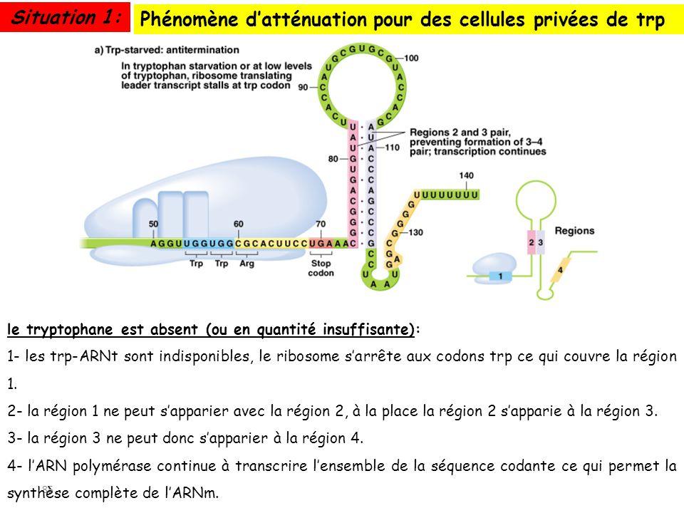 Phénomène d'atténuation pour des cellules privées de trp