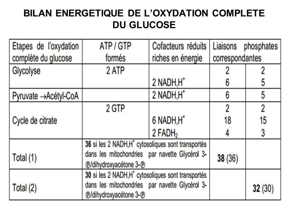 BILAN ENERGETIQUE DE L'OXYDATION COMPLETE DU GLUCOSE