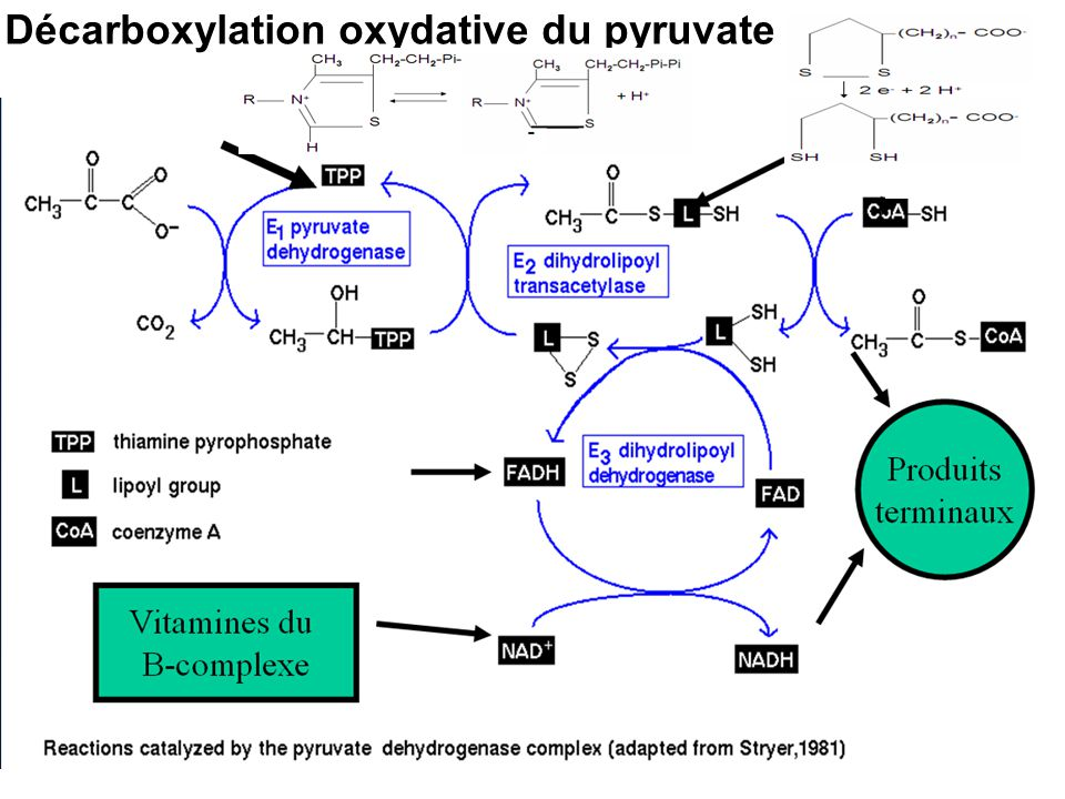 Décarboxylation oxydative du pyruvate