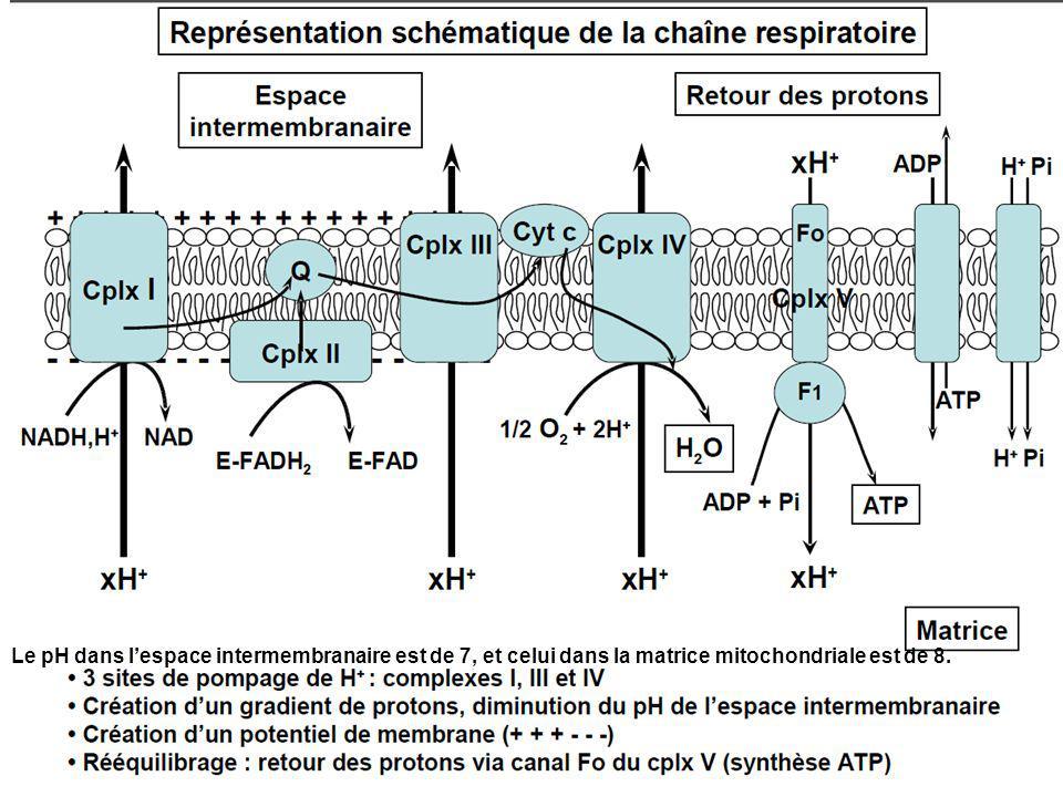 Le pH dans l'espace intermembranaire est de 7, et celui dans la matrice mitochondriale est de 8.