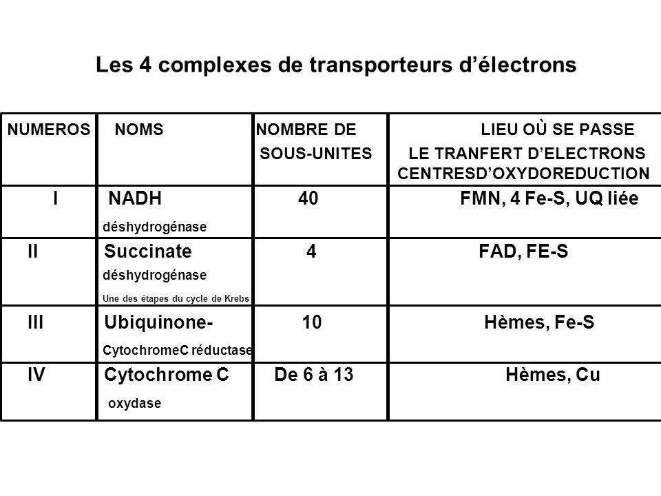 Les 4 complexes de transporteurs d'électrons