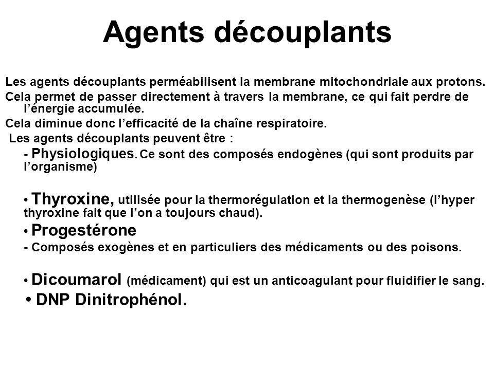 Agents découplants Les agents découplants perméabilisent la membrane mitochondriale aux protons.