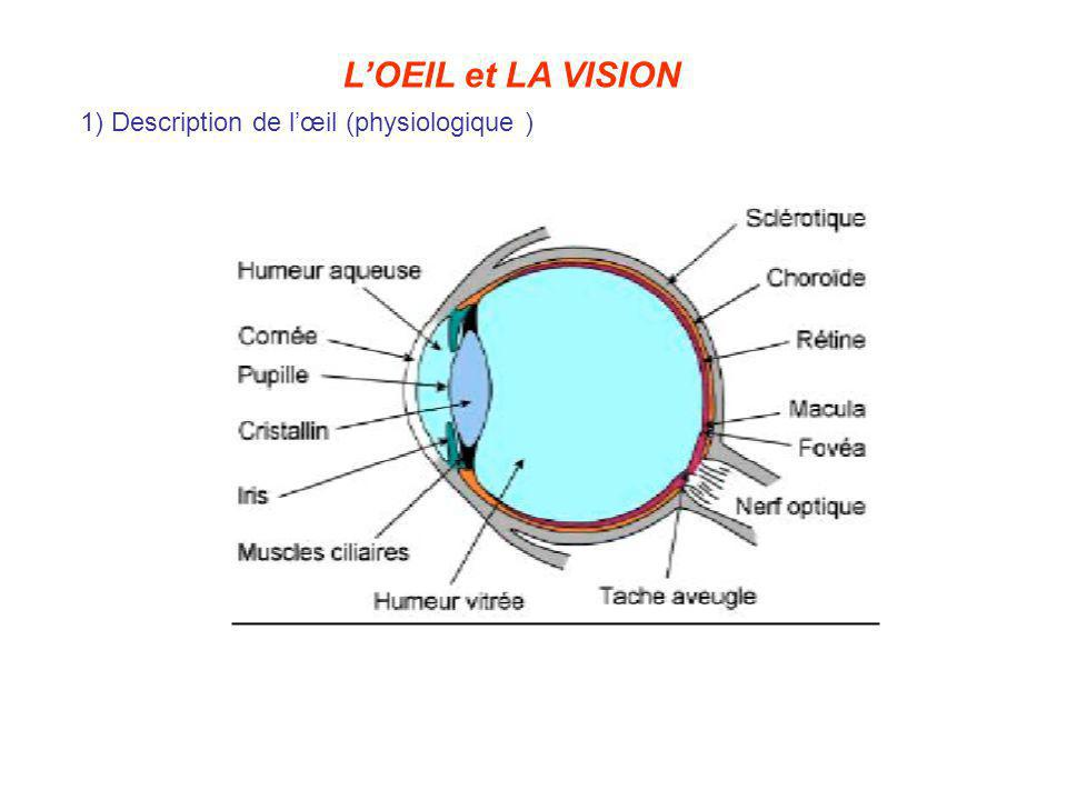 L'OEIL et LA VISION 1) Description de l'œil (physiologique )
