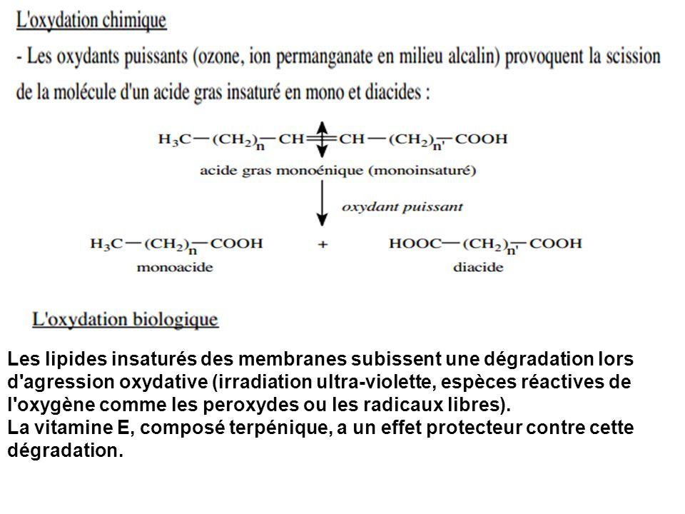 Les lipides insaturés des membranes subissent une dégradation lors d agression oxydative (irradiation ultra-violette, espèces réactives de l oxygène comme les peroxydes ou les radicaux libres).
