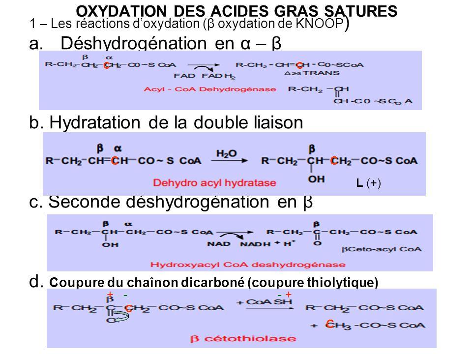OXYDATION DES ACIDES GRAS SATURES