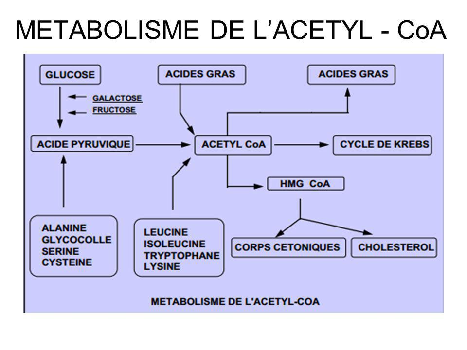 METABOLISME DE L'ACETYL - CoA