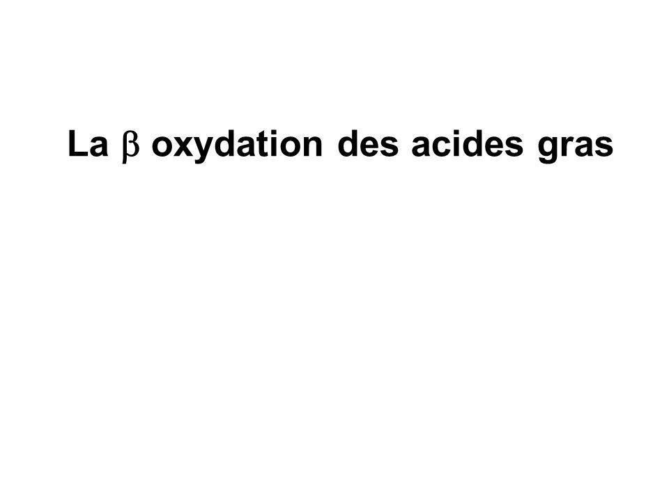 La b oxydation des acides gras