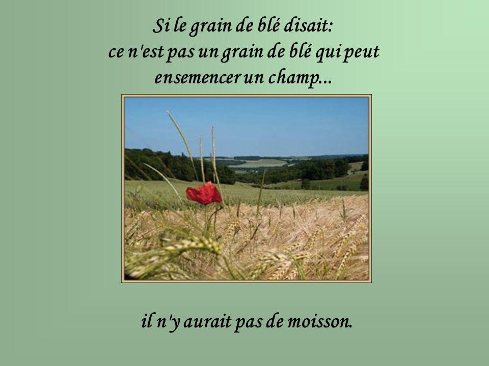 Si le grain de blé disait: