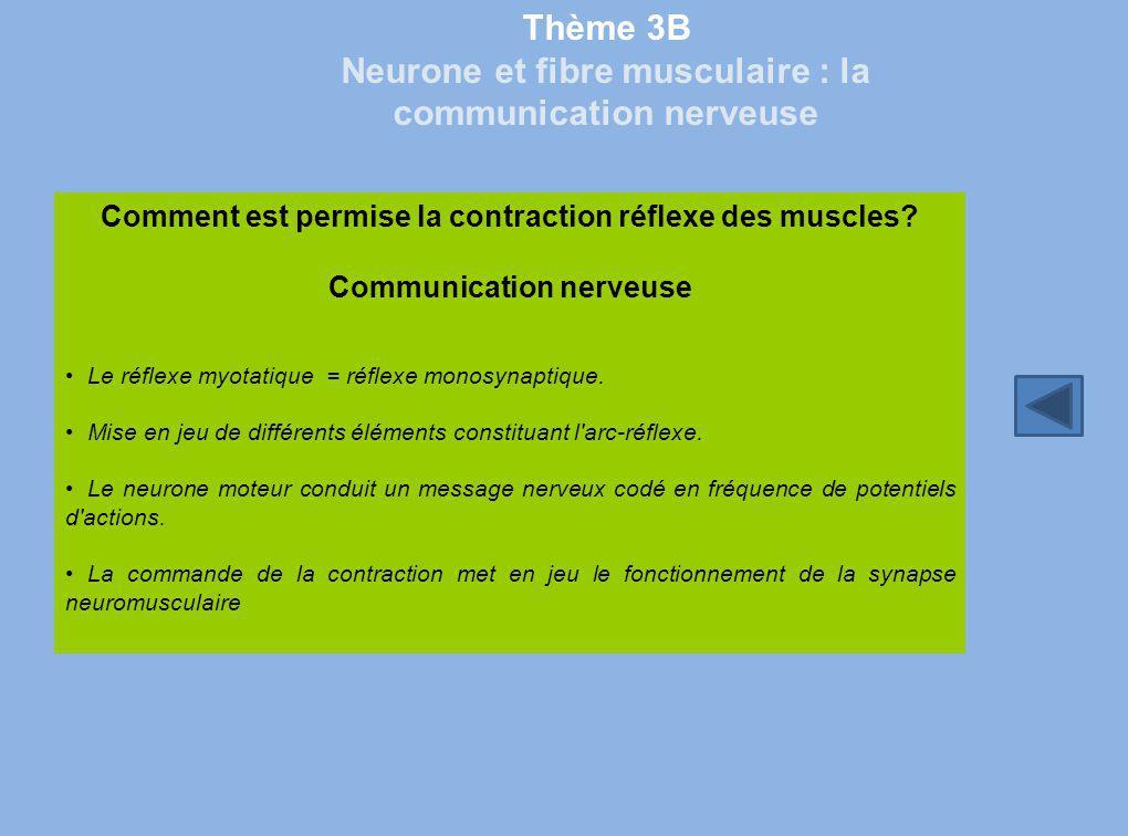 Thème 3B Neurone et fibre musculaire : la communication nerveuse