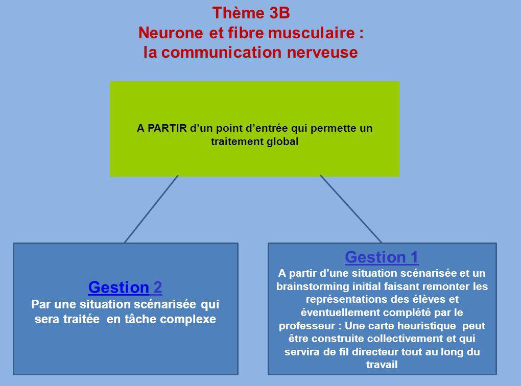 Neurone et fibre musculaire : la communication nerveuse