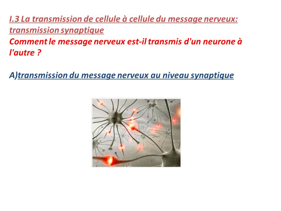 I.3 La transmission de cellule à cellule du message nerveux: transmission synaptique