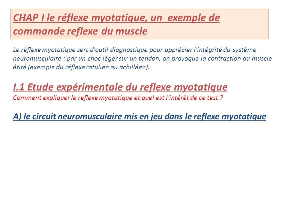CHAP I le réflexe myotatique, un exemple de commande reflexe du muscle